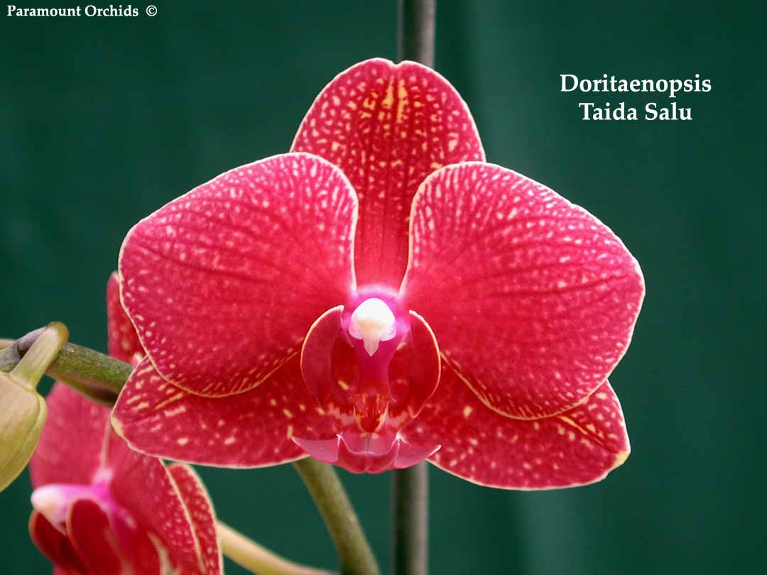 Rf Orchid Gallery 6